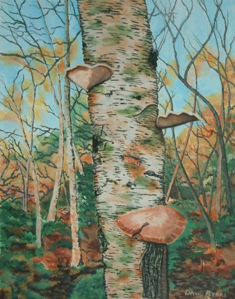 painting of birch tree with fungi