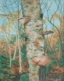 painting - birch tree fungi